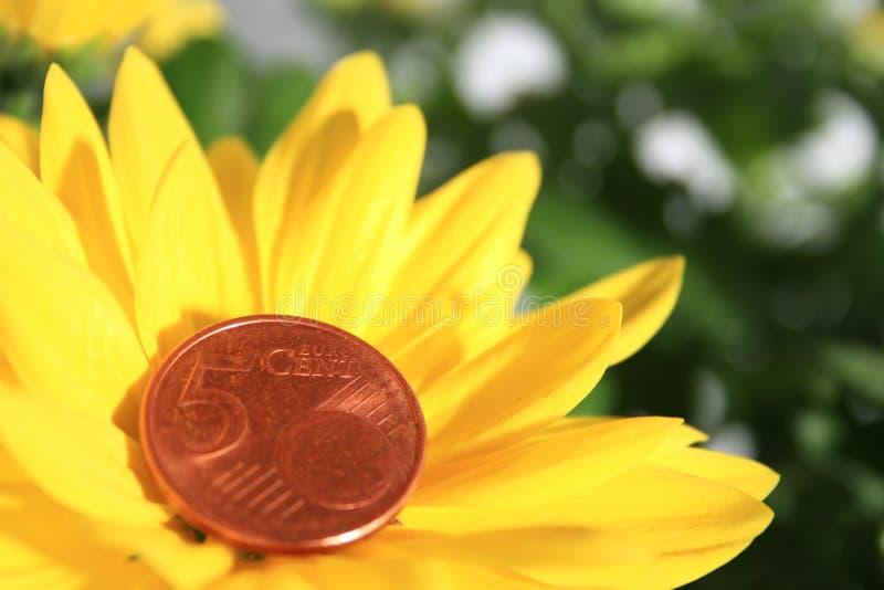 λουλούδι νομισμάτων στοκ φωτογραφίες