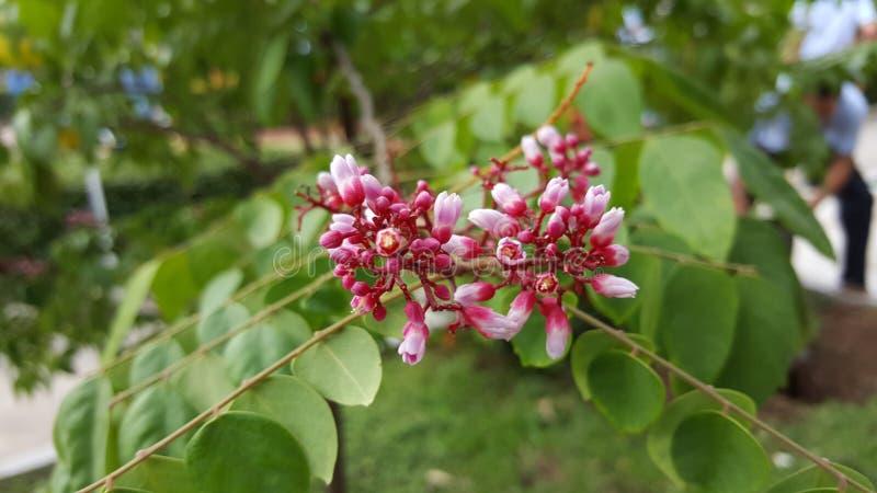 Λουλούδι νυχιών πουλιών στοκ φωτογραφία με δικαίωμα ελεύθερης χρήσης