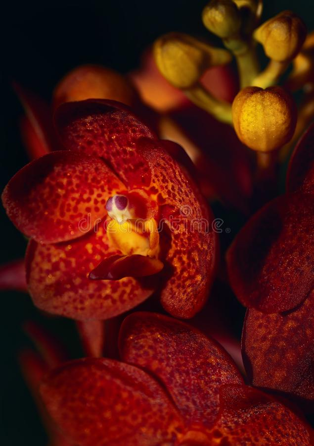 Λουλούδι ορχιδεών στον κήπο στοκ εικόνες