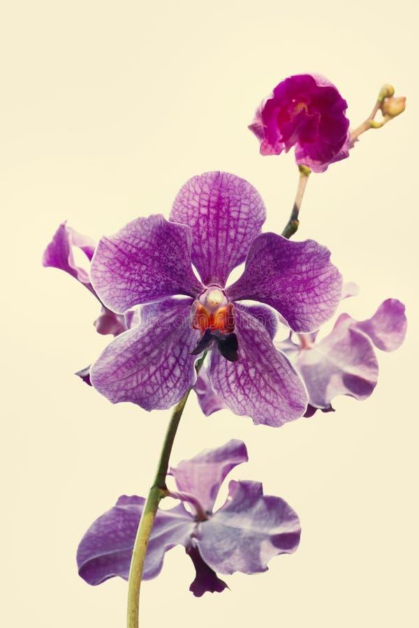 Λουλούδι ορχιδεών στον κήπο στοκ φωτογραφία