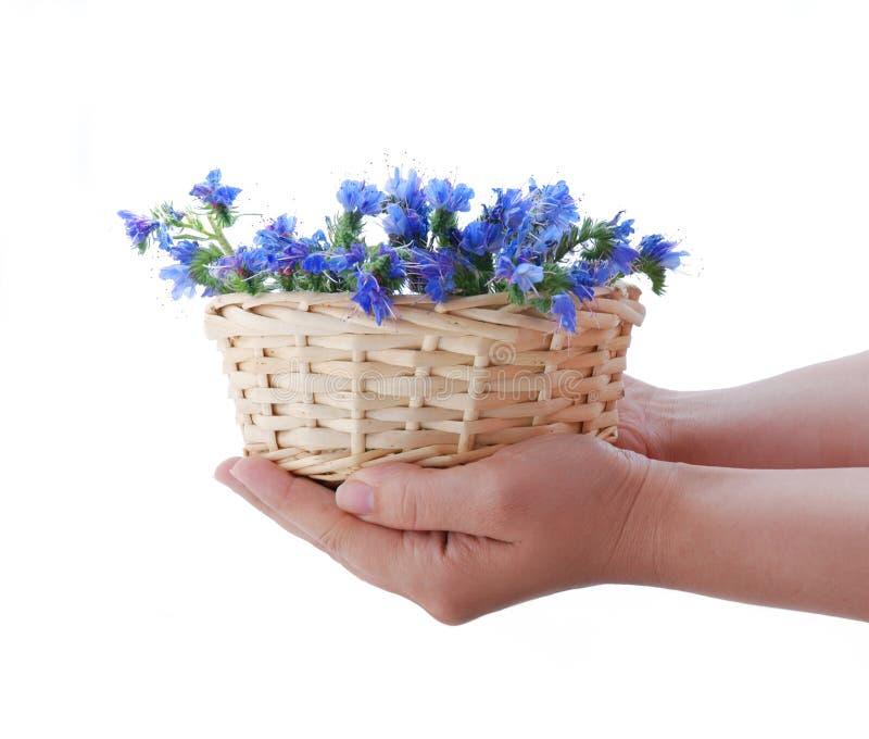 λουλούδι πεδίων καλαθ&io στοκ φωτογραφίες