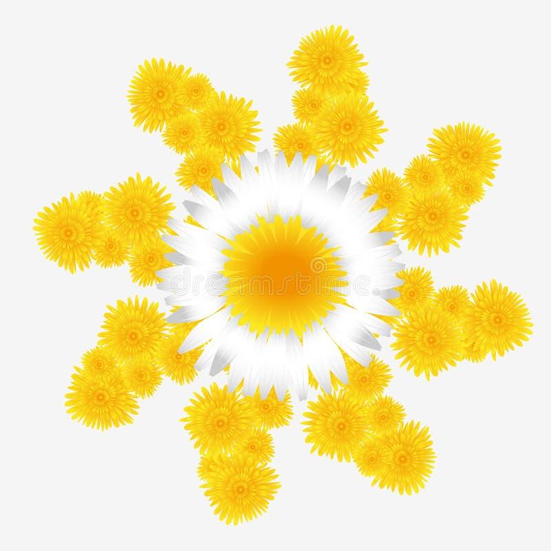 Λουλούδι πικραλίδων και μαργαριτών ελεύθερη απεικόνιση δικαιώματος