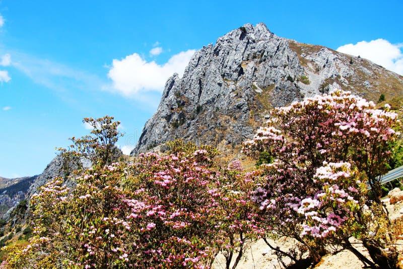 Λουλούδι, πορφυρό λουλούδι, αζαλέα, azalees στοκ φωτογραφία με δικαίωμα ελεύθερης χρήσης