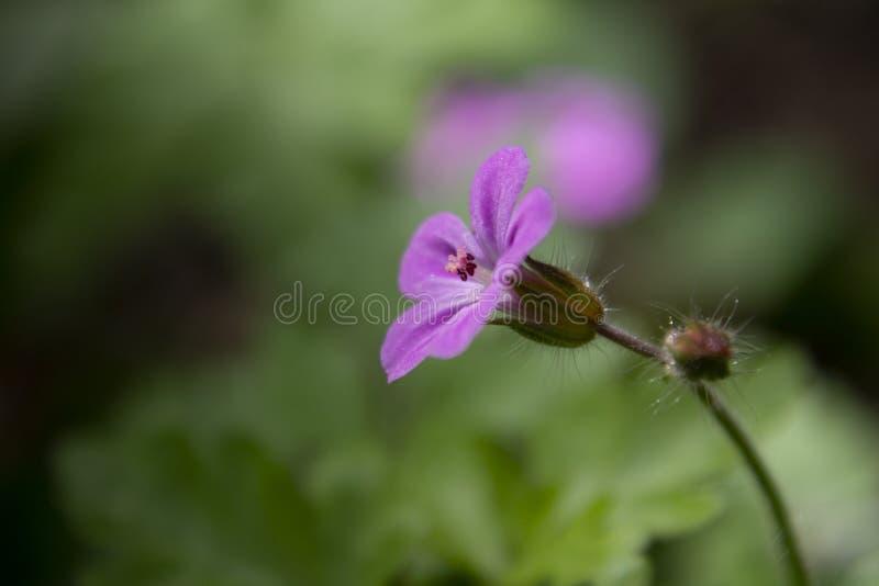 Λουλούδι που φωτογραφίζεται ρόδινο στο σχεδιάγραμμα στοκ φωτογραφίες