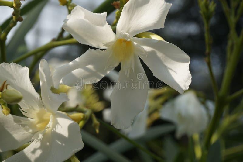 Λουλούδι που χορεύει στο δάσος στοκ φωτογραφίες