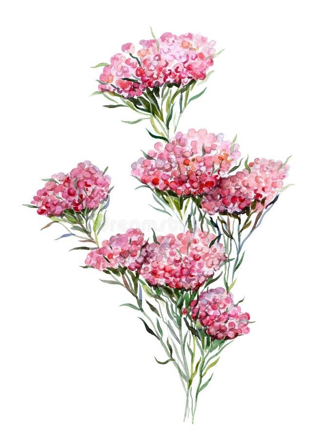 Λουλούδι ρυζιού Handdrawn απεικόνιση watercolor των εγκαταστάσεων απομονωμένο αντικείμενο Στοιχείο για το σχέδιο των ευχετήριων κ διανυσματική απεικόνιση