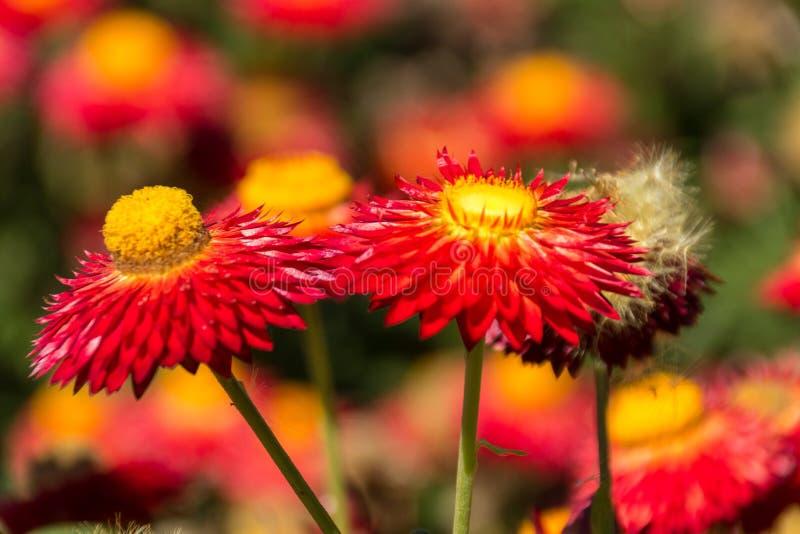 Λουλούδι σε ένα πάρκο στοκ φωτογραφίες με δικαίωμα ελεύθερης χρήσης