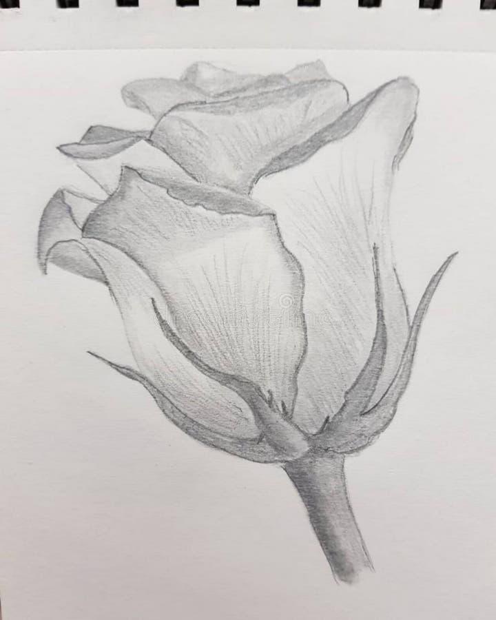 λουλούδι σκίτσων, τέχνη μολυβιών του λουλουδιού ελεύθερη απεικόνιση δικαιώματος