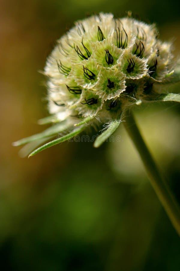 λουλούδι σπόρος στοκ φωτογραφίες