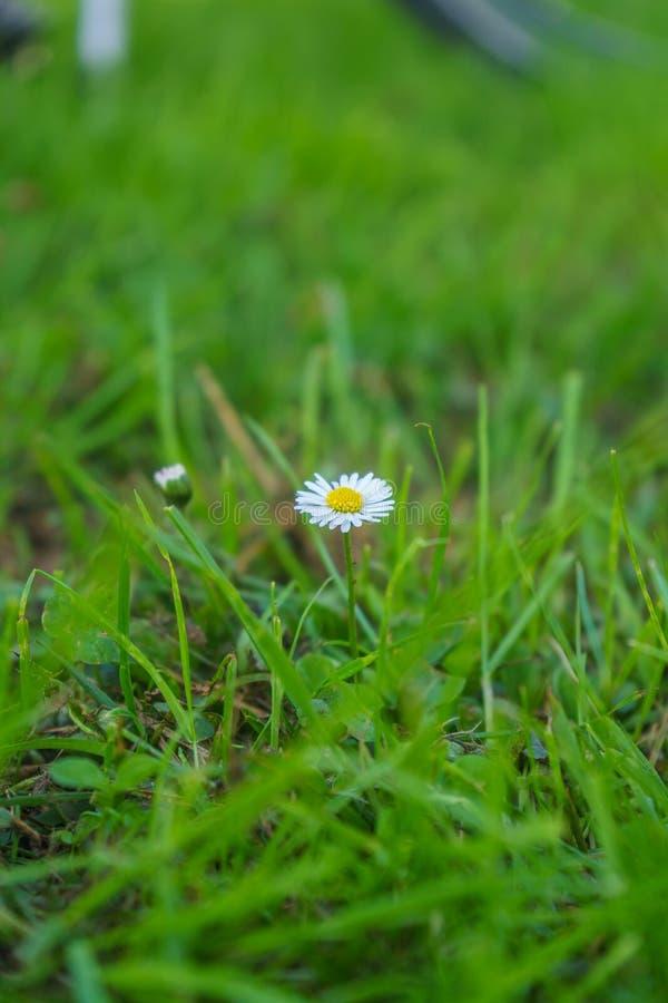 Λουλούδι στην άκρη τρόπων στοκ φωτογραφία με δικαίωμα ελεύθερης χρήσης