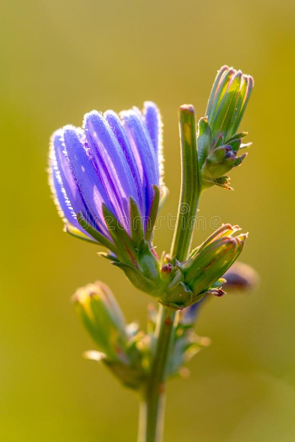 Λουλούδι στην ανατολή 2 στοκ φωτογραφίες με δικαίωμα ελεύθερης χρήσης