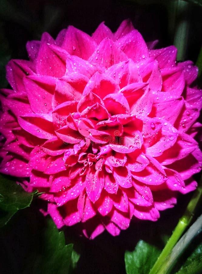 Λουλούδι στη νύχτα στοκ φωτογραφία