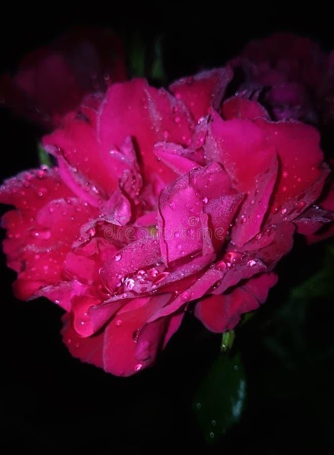 Λουλούδι στη νύχτα στοκ φωτογραφία με δικαίωμα ελεύθερης χρήσης