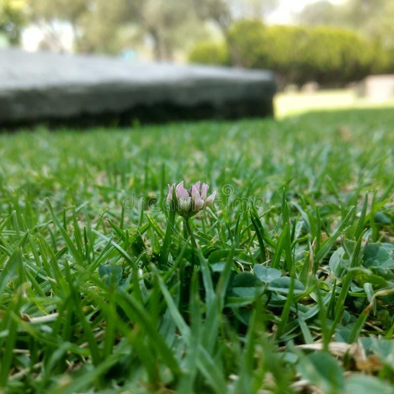 Λουλούδι στη χλόη στοκ φωτογραφίες