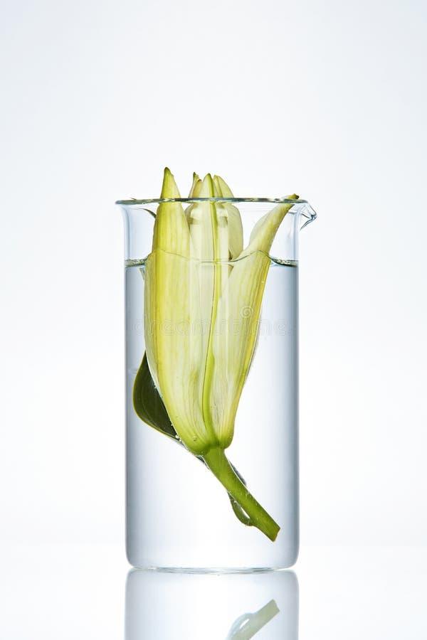 Λουλούδι στο εργαστηριακό γυαλί στο άσπρο υπόβαθρο στοκ φωτογραφίες