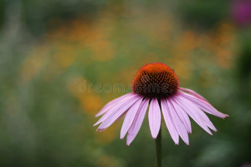 Λουλούδι στο θολωμένο υπόβαθρο στοκ εικόνα