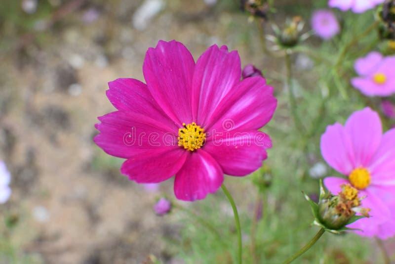 Λουλούδι στο μεταλλικό θόρυβο & την πορφύρα στοκ φωτογραφία με δικαίωμα ελεύθερης χρήσης