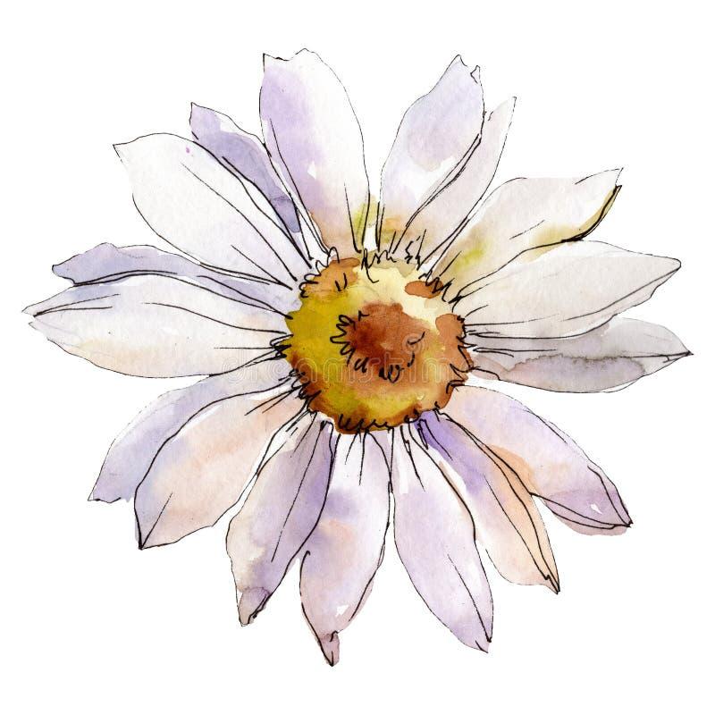Λουλούδι της Daisy Απομονωμένο στοιχείο απεικόνισης μαργαριτών Σύνολο απεικόνισης υποβάθρου Watercolor ελεύθερη απεικόνιση δικαιώματος