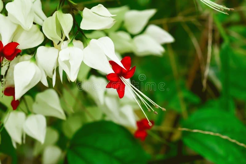 Λουλούδι τσαντών στοκ φωτογραφία