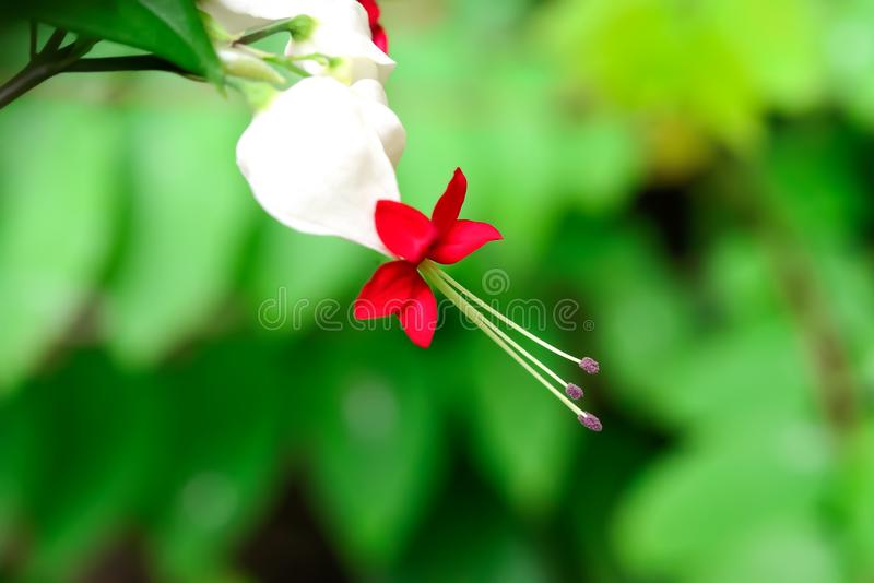 Λουλούδι τσαντών στοκ εικόνες