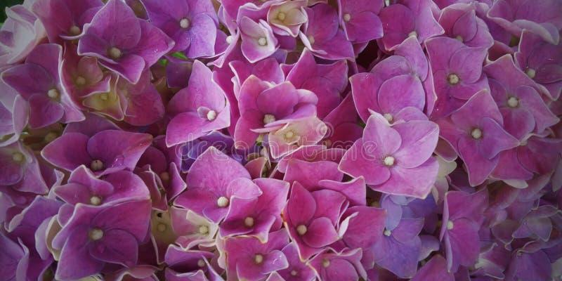 Λουλούδι υποβάθρου στοκ εικόνα με δικαίωμα ελεύθερης χρήσης