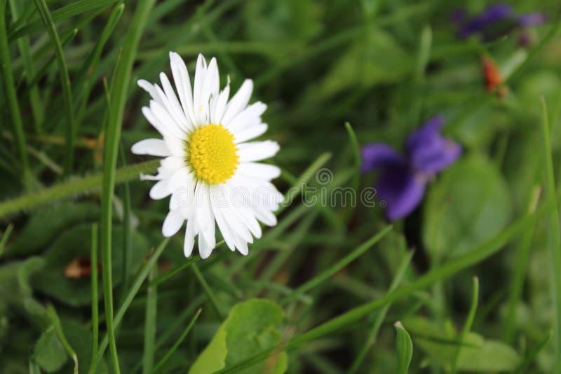 Λουλούδι φύσης στοκ εικόνα με δικαίωμα ελεύθερης χρήσης