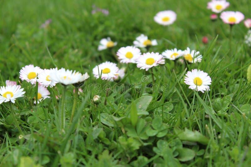 Λουλούδι φύσης στοκ φωτογραφία με δικαίωμα ελεύθερης χρήσης