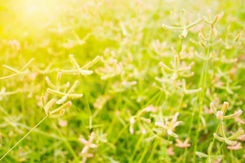 Λουλούδι χλόης στη χλόη που αρχειοθετείται στοκ εικόνες