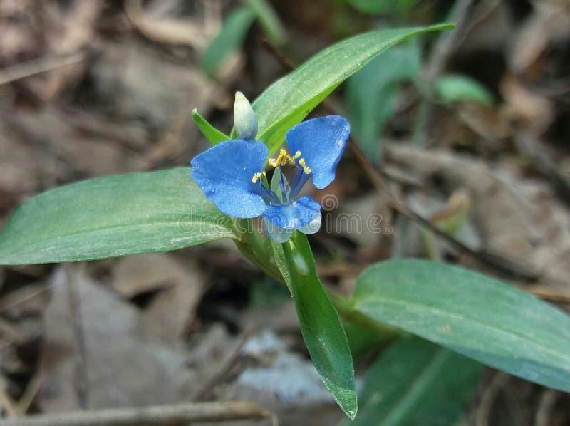 Λουλούδι χλόης στοκ εικόνες