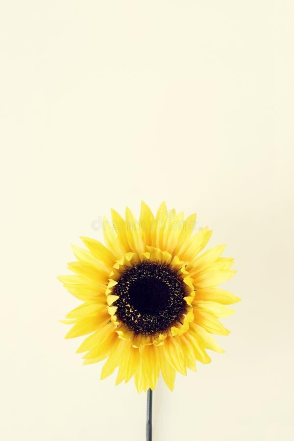 λουλούδι 4 κίτρινο στοκ εικόνα