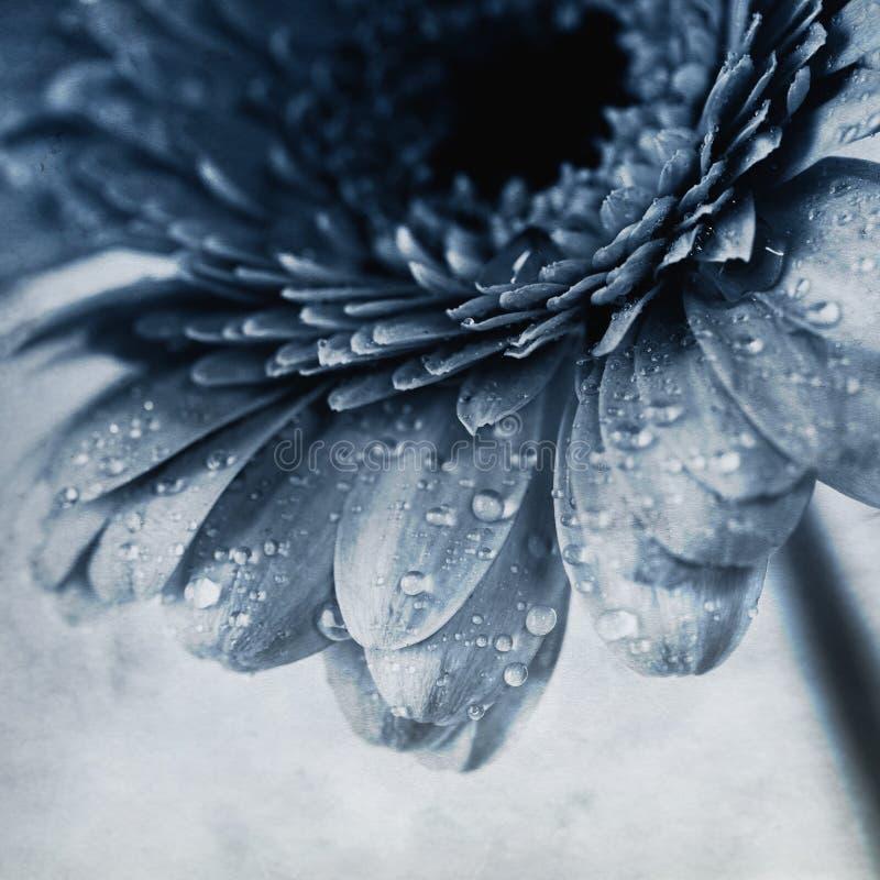 Λουλούδι Gerbera στοκ εικόνα με δικαίωμα ελεύθερης χρήσης