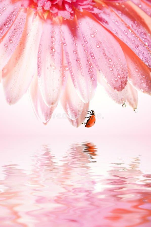 λουλούδι ladybug στοκ φωτογραφίες