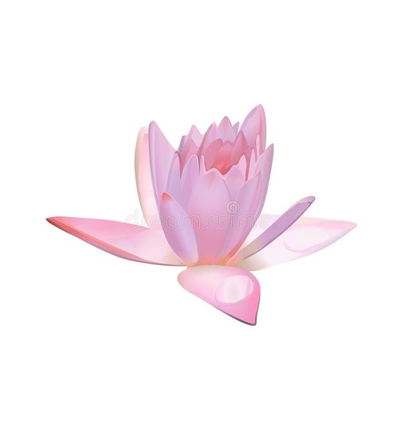 Λουλούδι Lotus ή ρόδινος κρίνος νερού διάνυσμα ελεύθερη απεικόνιση δικαιώματος