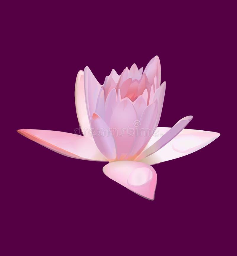 Λουλούδι Lotus ή ρόδινος κρίνος νερού διάνυσμα απεικόνιση αποθεμάτων