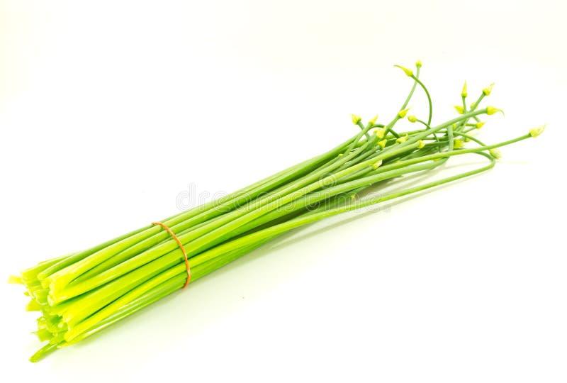 Λουλούδι Scallion στοκ φωτογραφία με δικαίωμα ελεύθερης χρήσης