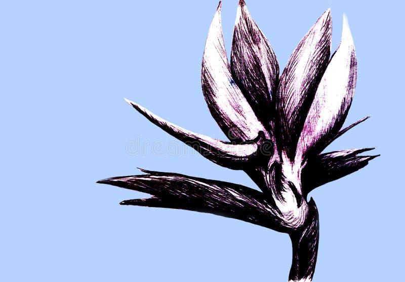Λουλούδι Strelitzia reginae απομονωμένο σε μπλε φόντο Χειροποίητη βοτανική απεικόνιση, εξωτικό τροπικό φυτό στοκ φωτογραφία
