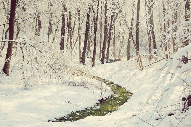 Λουρίδα της πράσινης χλόης στο χιόνι στοκ φωτογραφίες