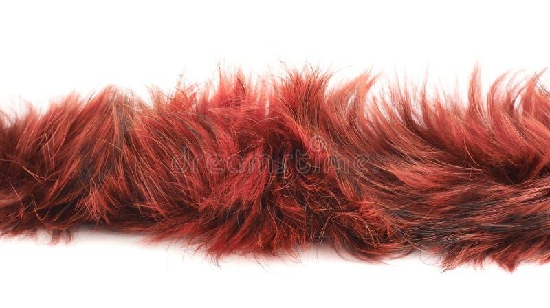 Λουρίδα της γούνας που απομονώνεται στοκ εικόνα με δικαίωμα ελεύθερης χρήσης