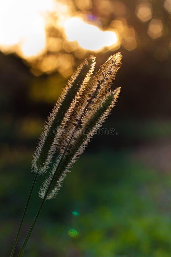 Λουσμένος στον ήλιο ακτίνων στοκ εικόνες