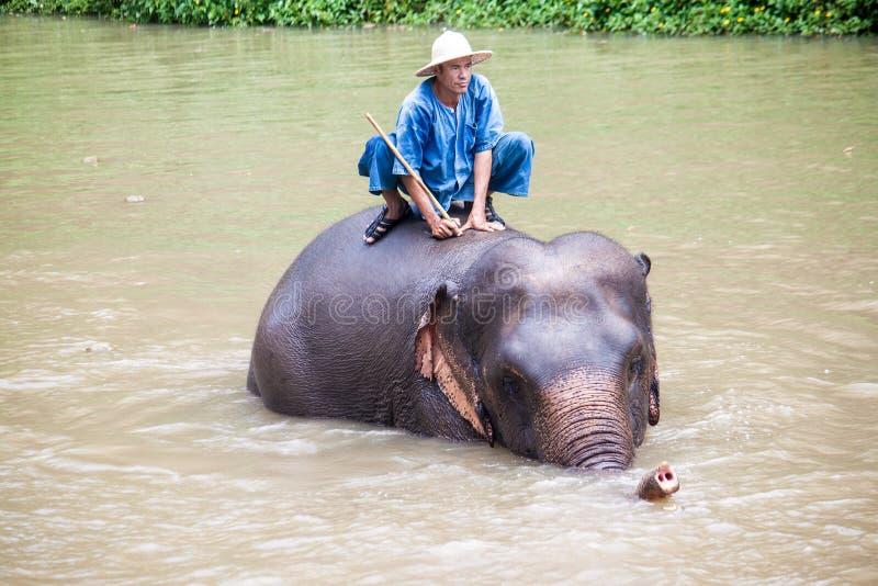 Λουτρά Mahout ο ελέφαντάς του στοκ φωτογραφία με δικαίωμα ελεύθερης χρήσης