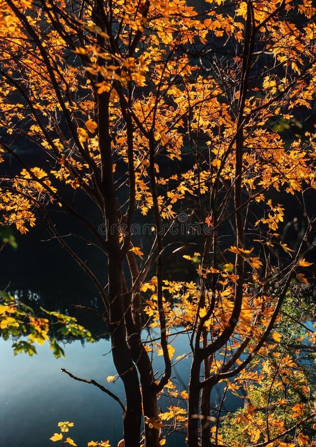 Λουτρό ήλιων φθινοπώρου στοκ εικόνες με δικαίωμα ελεύθερης χρήσης