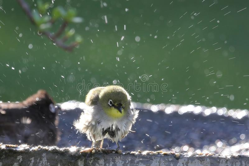 Λουτρό πουλιών στοκ φωτογραφίες με δικαίωμα ελεύθερης χρήσης
