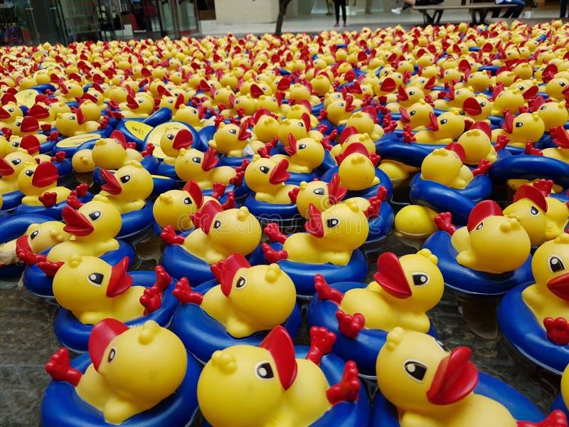 Λουτρό Ducky στοκ φωτογραφία