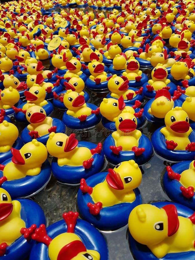 Λουτρό Ducky στοκ φωτογραφίες