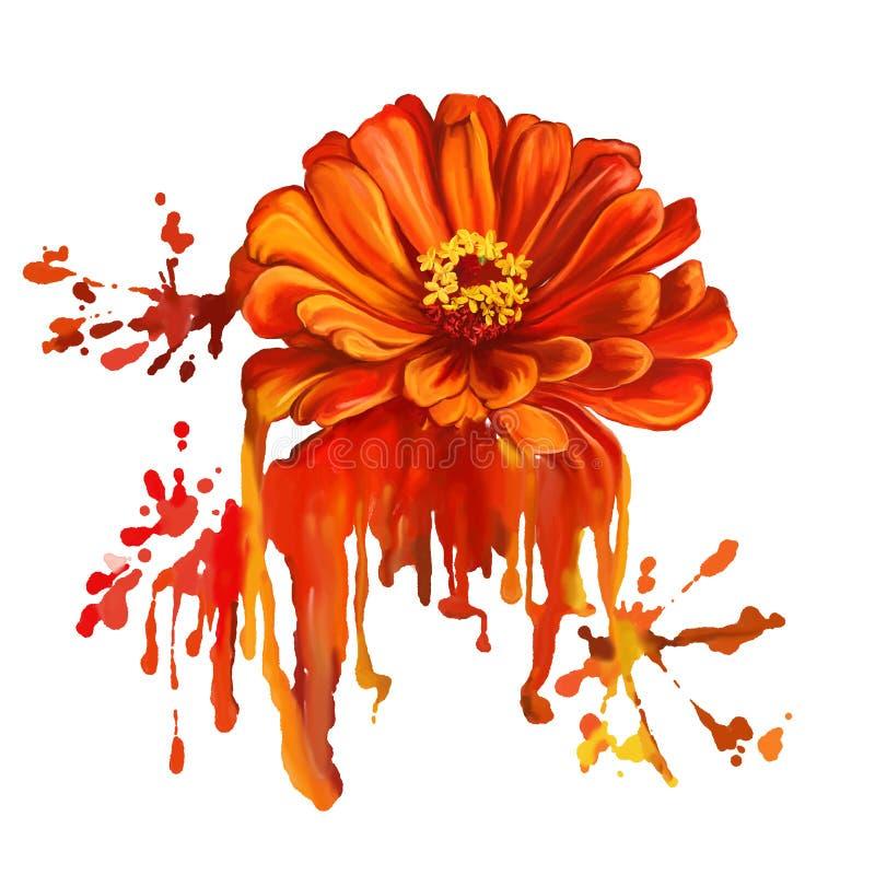 Λουλουδιών tsiniya χέρι απεικόνισης που σύρεται διανυσματικό ελεύθερη απεικόνιση δικαιώματος