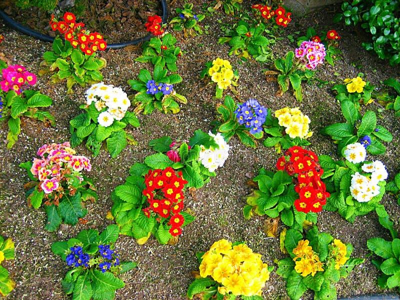 Λουλούδια άνθισης στοκ εικόνα με δικαίωμα ελεύθερης χρήσης