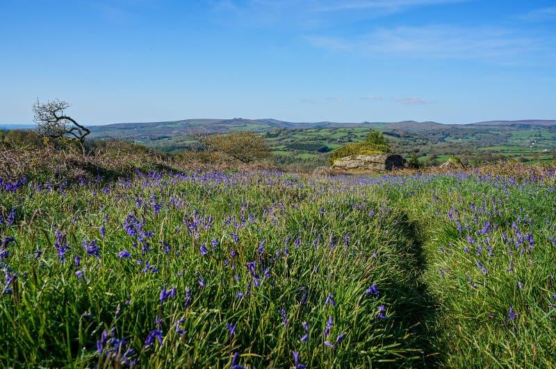Λουλούδια άνοιξης bluebell στοκ εικόνα με δικαίωμα ελεύθερης χρήσης