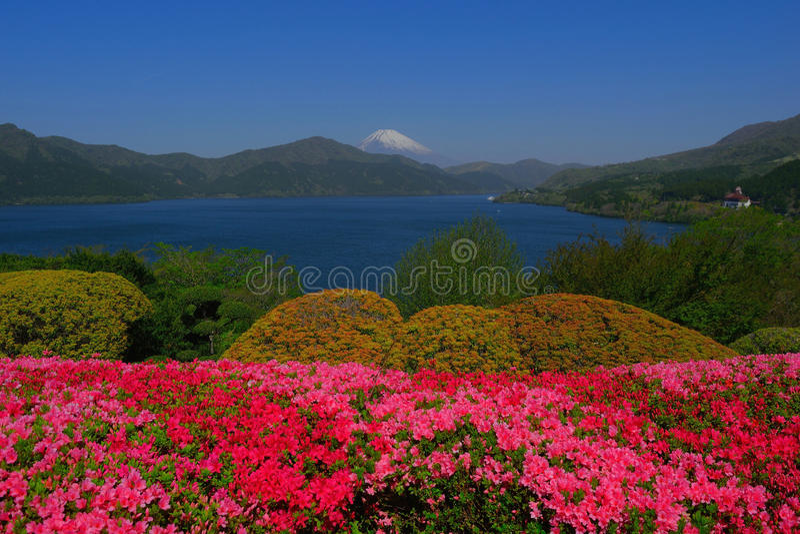 Λουλούδια άνοιξη και ΑΜ Φούτζι από Hakone στοκ φωτογραφία