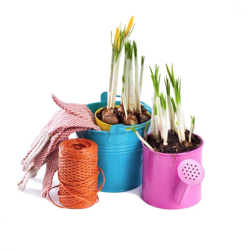Λουλούδια άνοιξη και εργαλεία κήπων που απομονώνονται στο λευκό στοκ φωτογραφία