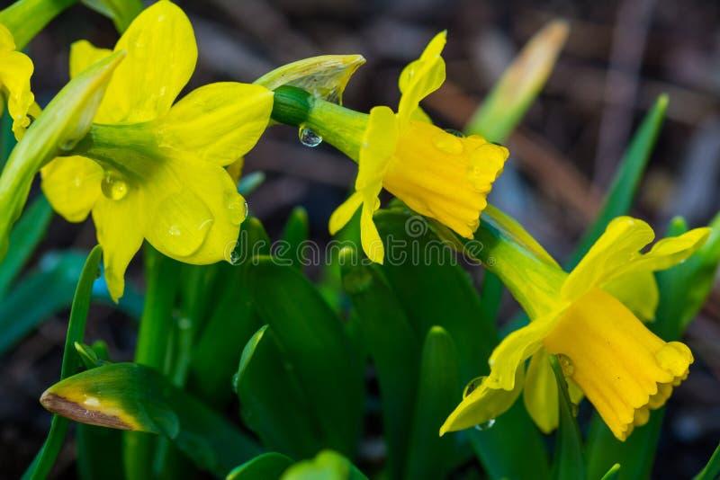 Λουλούδια άνοιξη μετά από τη βροχή στοκ φωτογραφίες με δικαίωμα ελεύθερης χρήσης